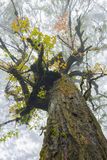 Tree crown in mist Royalty Free Stock Images