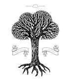 Tree crown in the shape of cloud Royalty Free Stock Photography
