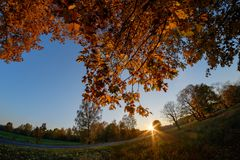 Tree crown at sunset royalty free stock photography