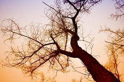 Tree crown in the winter evening sun. Against the sky Stock Photography