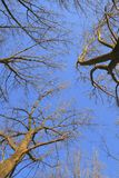 Tree crowns on deep blue sky Royalty Free Stock Photo