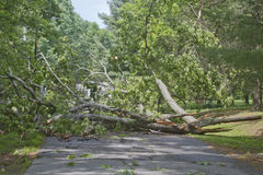 Tree Crumpled Across Road Stock Photos
