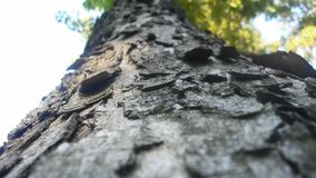 Tree crust Royalty Free Stock Photos