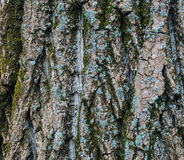 Tree Crust Texture Royalty Free Stock Photos