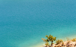A tree with a crystal clear and blue water. In background royalty free stock photography