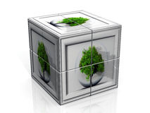 Tree and cube Royalty Free Stock Image