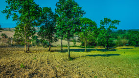 Tree in cultivate field Stock Images