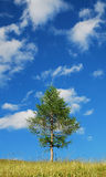 Tree with Cumulus Fractus Royalty Free Stock Image