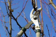 Tree cut 07. Garden work in spring, with secateurs Stock Photography