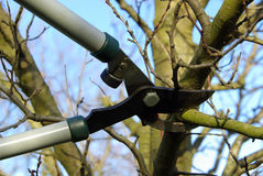 Tree cut 11. Tree cutting with a secateurs Royalty Free Stock Photos