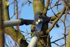 Tree cut 13. Cuttin a branch, garden work in spring Stock Photos