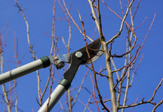 Tree cut 14. Cuttin a branch, garden work in spring Royalty Free Stock Photos