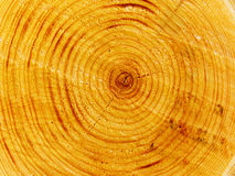 Tree cut Royalty Free Stock Photography