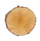 Tree cut Stock Image