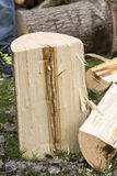 Tree cut disease Stock Images
