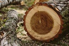 Tree cut down Stock Photo