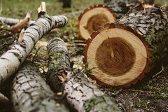 Tree cut down. Wooden beckgound Royalty Free Stock Photo
