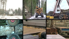 Tree cut in forest. Parquet board production. video clip collage stock video