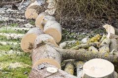 Tree cut on grass Stock Photo