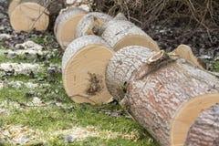 Tree cut on grass Royalty Free Stock Photo