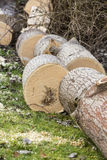 Tree cut on grass Stock Image