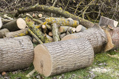 Tree cut on grass Royalty Free Stock Photography