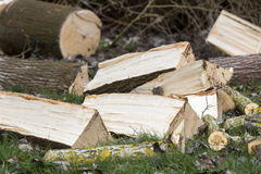 Tree cut on grass Stock Photography