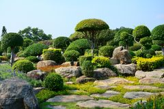 The tree is cut into mushroom shrubs with stones in the garden. The tree is cut into mushroom shrubs with stones in the garden,travel holiday in Thailand Royalty Free Stock Image