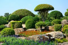 The tree is cut into mushroom shrubs with stones in the garden. The tree is cut into mushroom shrubs with stones in the garden ,travel holiday in Thailand Stock Image
