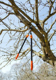 Tree cut orange two handle clippers spring garden Royalty Free Stock Image