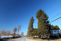 Tree cut out to allow power lines Royalty Free Stock Photos