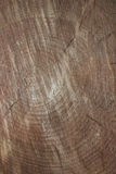 Tree cut. The tree cut painted with annual rings Royalty Free Stock Photos