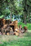 A tree cut into pieces Stock Images
