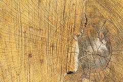 Tree cut structure Stock Image