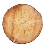 Tree in a cut. On a white background stock image