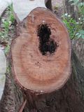 Tree cut Stock Image
