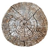 Cut wood trunk or tree stump Royalty Free Stock Image