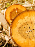Tree cut in wood. аbstract background Royalty Free Stock Images