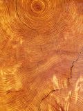 Tree cut year rings. Old tree cut with pronounced year rings Stock Image