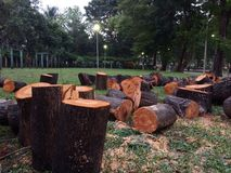 Tree Cuts for Wooden Logs Royalty Free Stock Photography