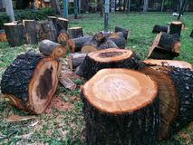 Tree Cuts for Wooden Logs Royalty Free Stock Image