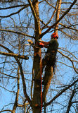 Tree cutter cutting limbs from tree Stock Photos