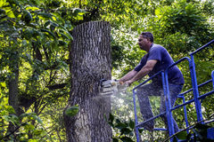 Tree Cutter Royalty Free Stock Images