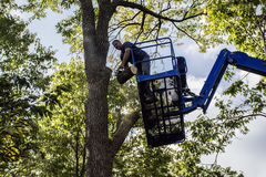 Tree Cutter Royalty Free Stock Photo