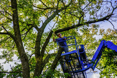 Tree Cutter Royalty Free Stock Image