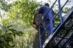 Tree Cutter Stock Images