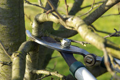 Tree cutting 03. Tree cut in spring, garden work Stock Images