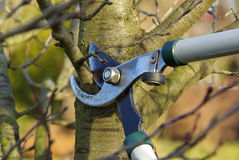Tree cutting 04. Garden work in winter, trim the trees Stock Images