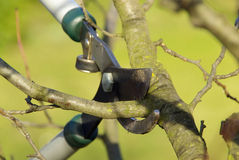 Tree cutting 15. Tree cutting in spring, gardening Royalty Free Stock Photography