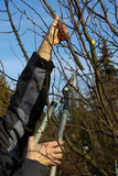 Tree cutting 17. Tree cutting, gardening in spring Royalty Free Stock Image